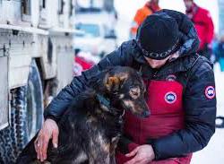 Lance Mackey Iditarod Champion