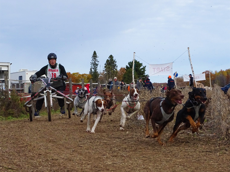 Mike Marsch Mushing 2019